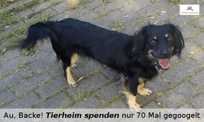 Tierheim Spenden Hund