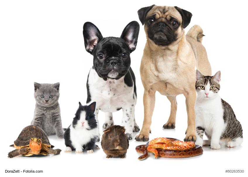 Was jeder über deutsche Tierheime wissen sollte